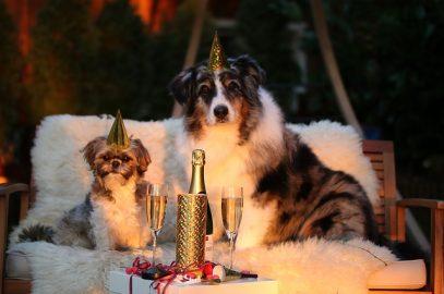 Silvester und Hunde